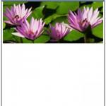スマートフォンECサイトデザインの基本~スマートフォンCSS活用基礎(7)~